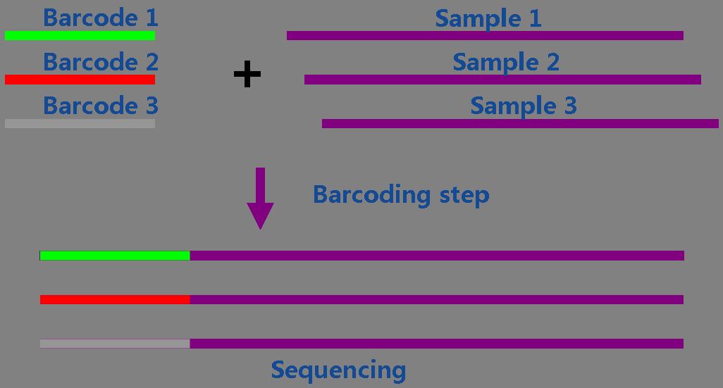 二代测序文库构建方法